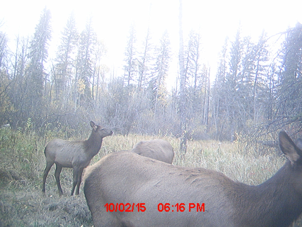 Elks stopping by